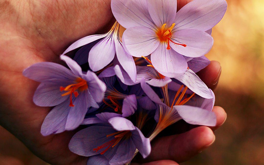 Deze bloemen kun je eten