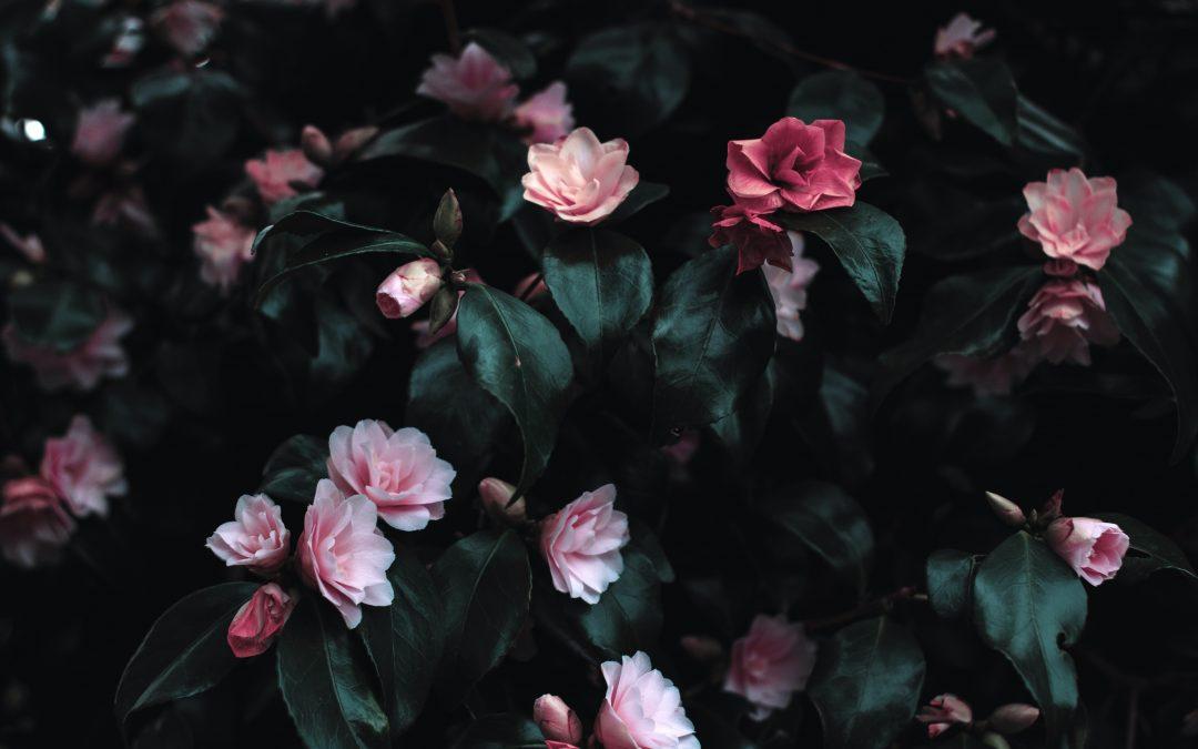 Op deze manier zorg je er voor dat je opvalt als bloemenwinkel
