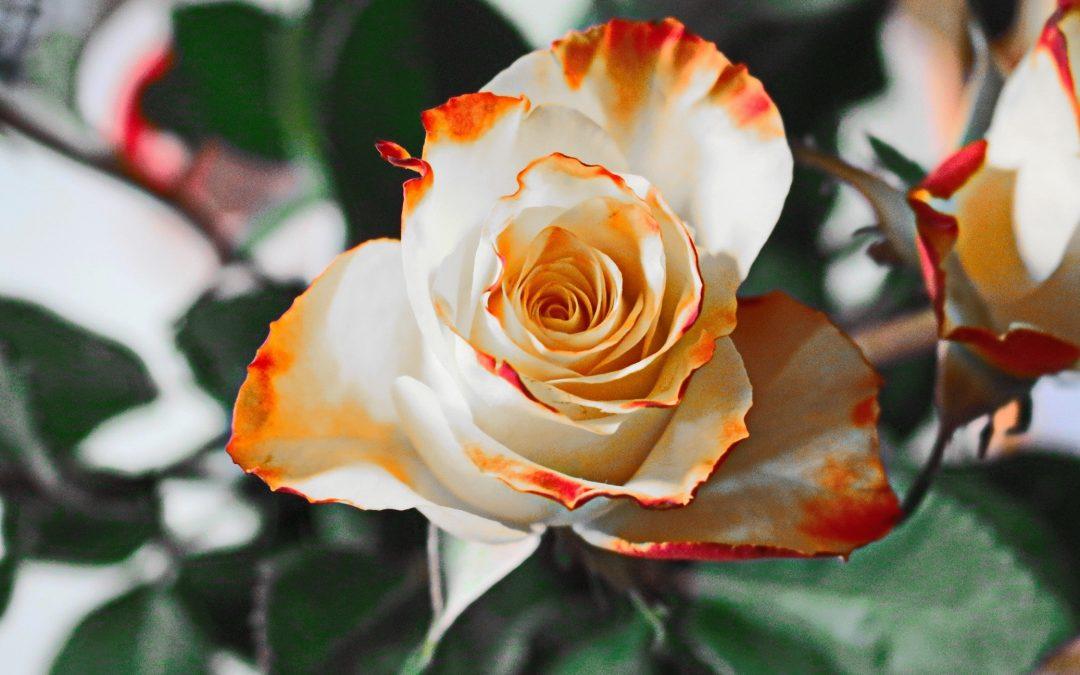 Alles over bloemen en online boeketten bestellen